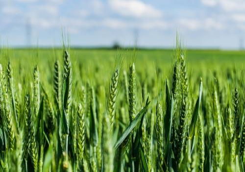 Watch crop growth